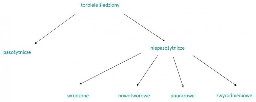 Podział torbieli śledziony. Infografika eduson.pl