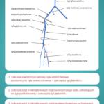 Zakrzepica żył głębokich kończyn dolnych - point of care - Portal wymiany wiedzy o ultrasonografii - Eduson