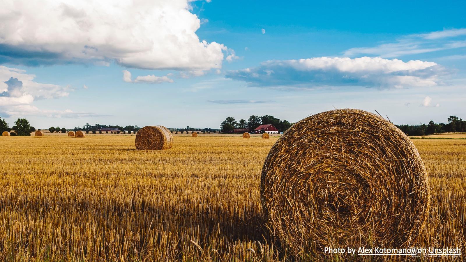 #34 Nadnercza czy pola... nadnerczowe? - Portal wymiany wiedzy o ultrasonografii - Eduson