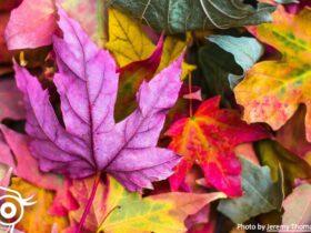 #90 Jesienny kaszel, czyli znowu czas na usg płuc! - Portal wymiany wiedzy o ultrasonografii - Eduson